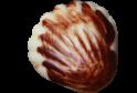 Dary moře