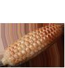 Kukuřička